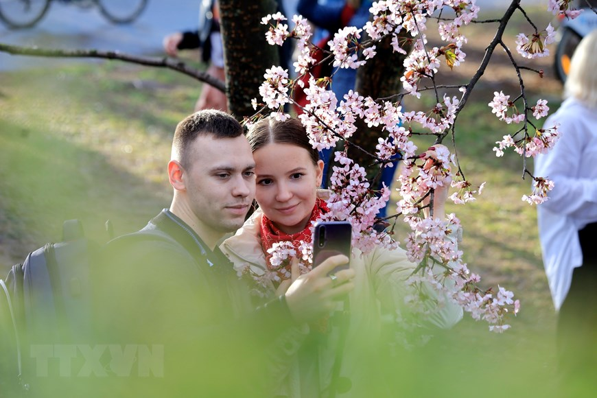 Người dân Moskva đội mưa tới công viên ngắm hoa anh đào đua nở - 9