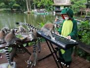 Vắng khách, vườn thú chơi nhạc giải khuây cho động vật