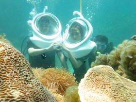- Lặn biển Nhơn Hải mùa rong mơ